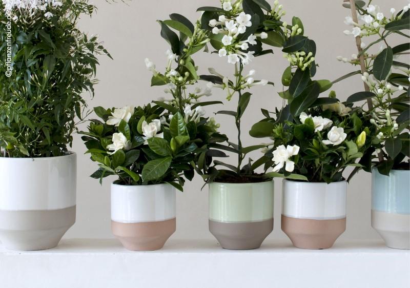Pflanzgefasse Blumen Risse
