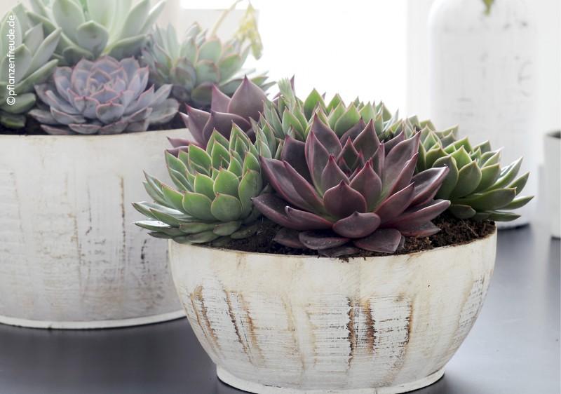 Pflanzschale mit Untersetzer Blumentopf Pflanzgefäß Keramik Blumenschale