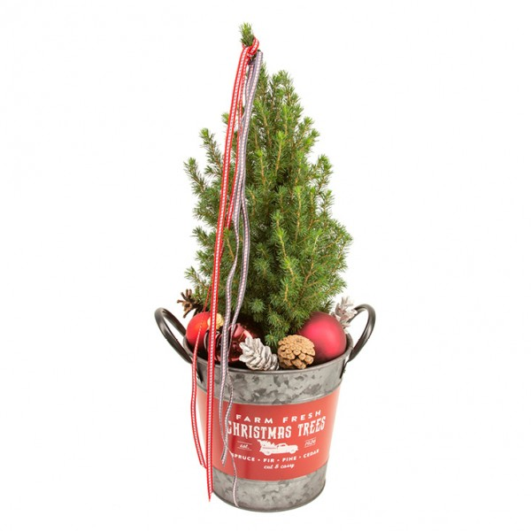 Weihnachtlich dekorierte Zuckerhutfichte