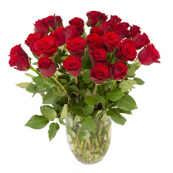 Rosen Rot, 30 Stück