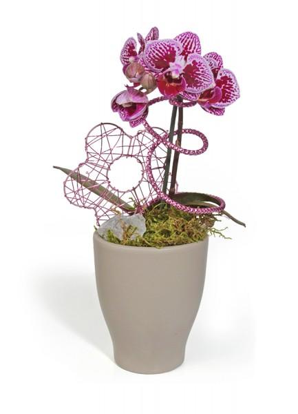 Mini-Orchidee im hohen Übertopf