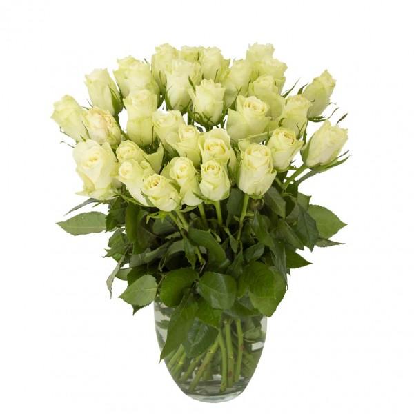 Rosen Weiß, 30 Stück