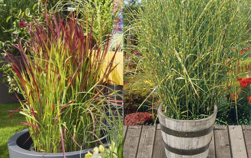 Gräser Und Bambus Baumschule Blumen Und Pflanzen Sortimente