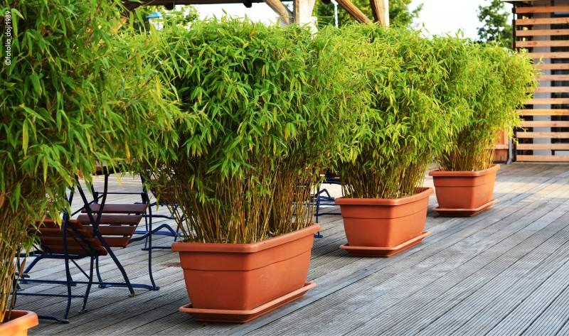 Gräser und Bambus | Baumschule | Blumen und Pflanzen | Sortimente ...