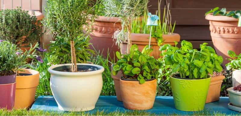 Im Kräuter Und Gemüsegarten Themenwelten Sortimente Blumen Risse