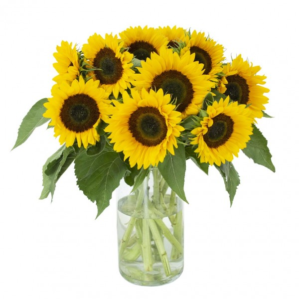 Sonnenblumen, 10 Stück